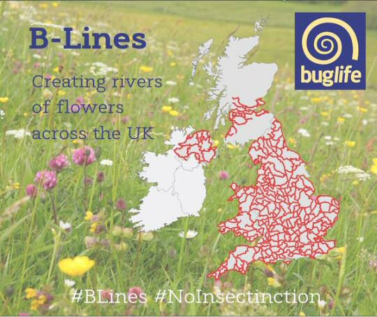 Shipley Woodside Community Garden is now registered on Bug-Life's B-Lines map