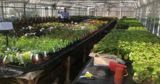 Broomfield Hall Plant Centre Re-opens