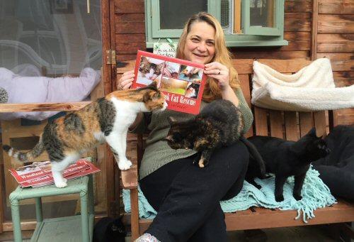 Cat Rescue Swanwick Derbyshire