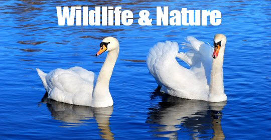 Wildlife & Nature Events in and around The Amber Valley